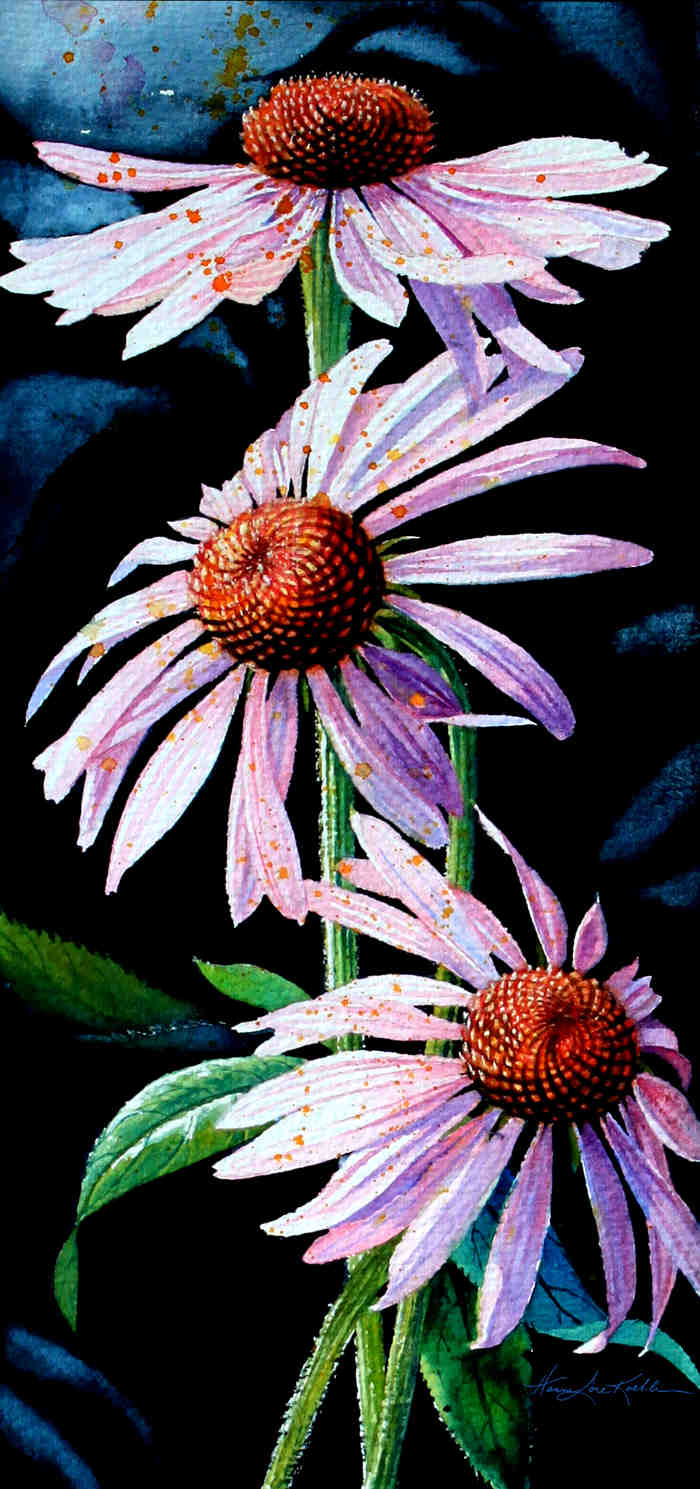 purple cone flower paintings