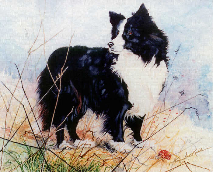 painted dog portrait of a Border Collie