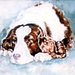 cocker spaniel pet portrait from photo